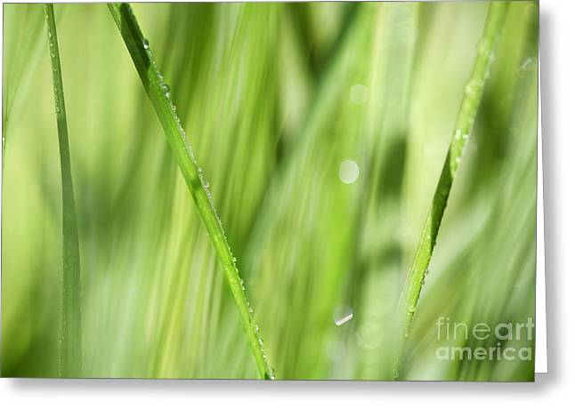 Green Blade Of Grass Greeting Cards - Dew Drops in Long Sunlit Grass Greeting Card by Natalie Kinnear