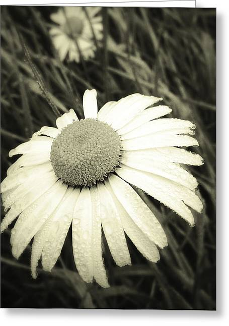 Wet Petals Greeting Cards - Dew drops  Greeting Card by Les Cunliffe