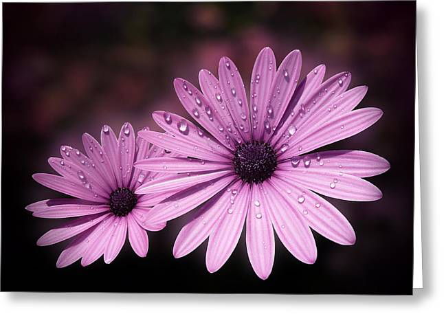 Valzart Greeting Cards - Dew drops on Daisies Greeting Card by Valerie Anne Kelly