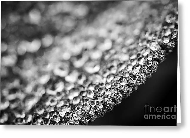Dew Drop Greeting Cards - Dew drops on leaf edge Greeting Card by Elena Elisseeva