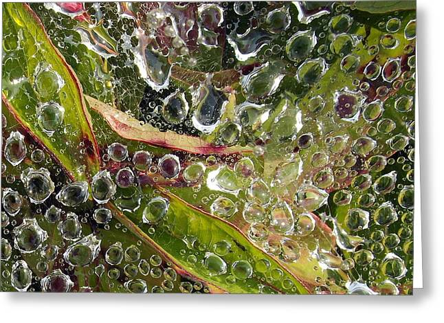 Drop Tapestries - Textiles Greeting Cards - Dew Drops Greeting Card by Suzi Freeman