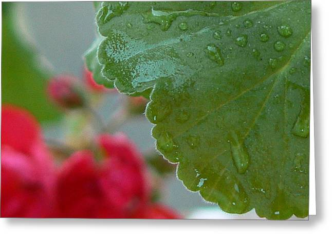 Tia Marie Mcdermid Greeting Cards - Dew Drops Greeting Card by Tia Marie McDermid