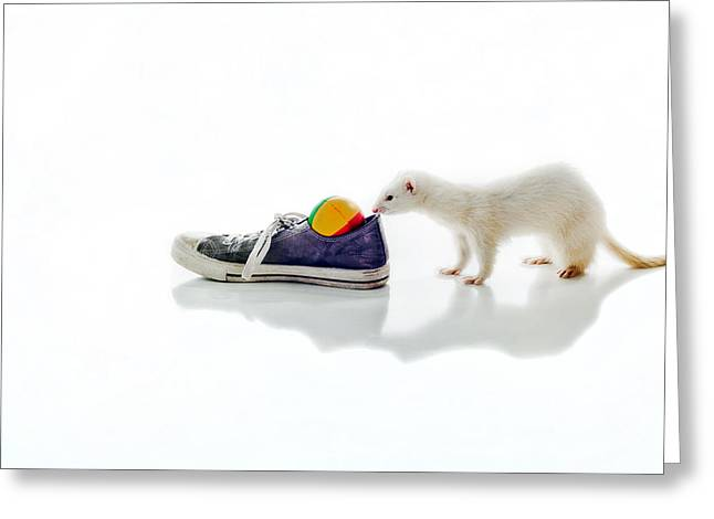 White Ferret Greeting Cards - DEW Ferret Greeting Card by Sennie Pierson