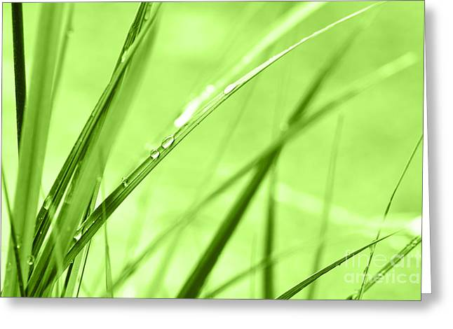 Green Blade Of Grass Greeting Cards - Dew in grasses Greeting Card by Jana Behr