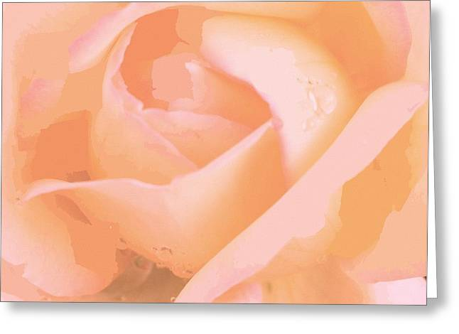Petals With Droplets Greeting Cards - Dew Laced Pink Rose  Greeting Card by Rosemarie E Seppala