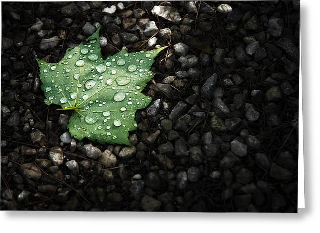 Pebbles Greeting Cards - Dew on Leaf Greeting Card by Scott Norris