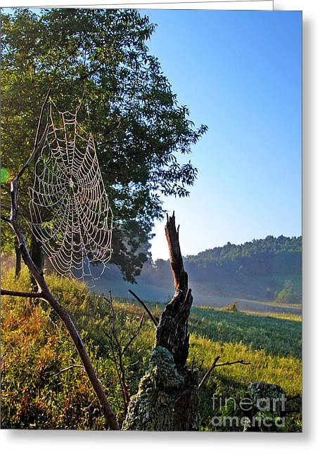 Dew Covered Greeting Cards - Dew on Spider Web Greeting Card by Thomas R Fletcher