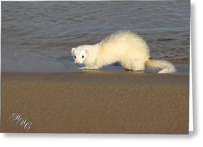 White Ferret Greeting Cards - DEW on the Water Greeting Card by Alicia McNally