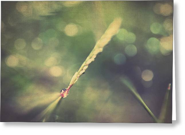 Photos Of Autumn Greeting Cards - Dew Greeting Card by Taylan Soyturk