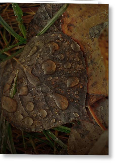 Jerry Cordeiro Greeting Cards - Dew To Age  Greeting Card by Jerry Cordeiro