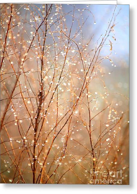 Dewdrops Greeting Cards - Dewdrop Morning Greeting Card by Carol Groenen