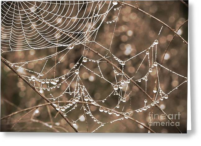 Dewdrops Greeting Cards - Dewdrop Web in Sepia Greeting Card by Carol Groenen