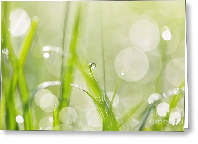 Dewdrops Greeting Cards - Dewdrops in Sunlit Grass 2 Greeting Card by Natalie Kinnear