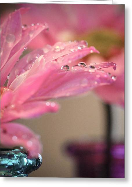 Dewdrops Greeting Cards - Dewdrops On Pink Greeting Card by Christy Patino