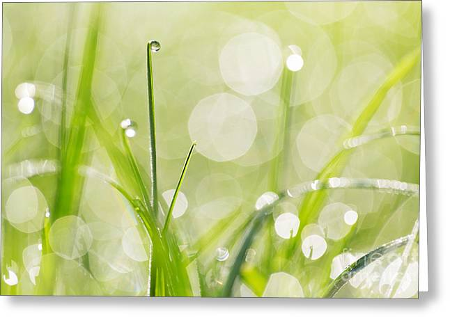 Dewdrops Greeting Cards - Dewdrops on the Sunlit Grass Greeting Card by Natalie Kinnear