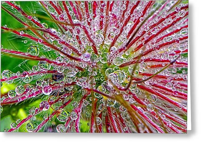 Dewdrops Greeting Cards - Dewdrops Greeting Card by Sharon  Talson