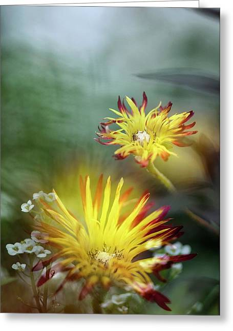 Dewflower (drosanthemum Micans) Greeting Card by Maria Mosolova