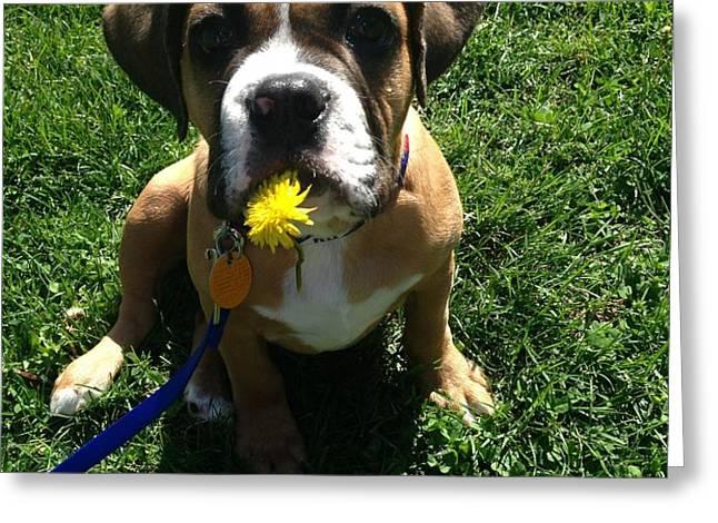 Dexter Puppy Greeting Card by Carolyn Hartmann