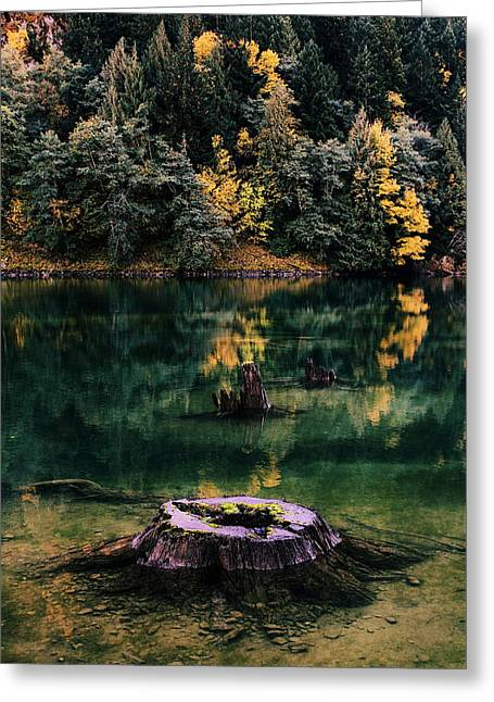 North Cascades Greeting Cards - Diablo Lake Tree Stump Greeting Card by Benjamin Yeager