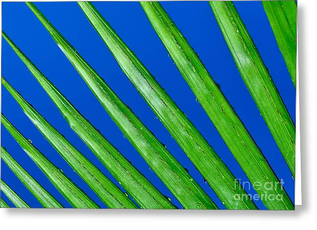 Geometrical Photographs Greeting Cards - Diagonal Nature Greeting Card by Kaye Menner