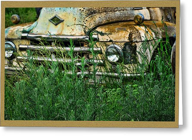 Ron Roberts Photography Greeting Cards Greeting Cards - Diamond in the weeds Greeting Card by Ron Roberts