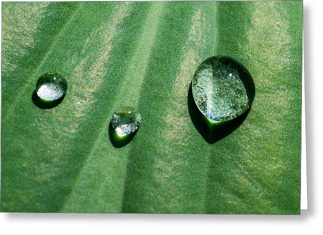 Herbage Greeting Cards - Diamonds are forever - Featured 3 Greeting Card by Alexander Senin