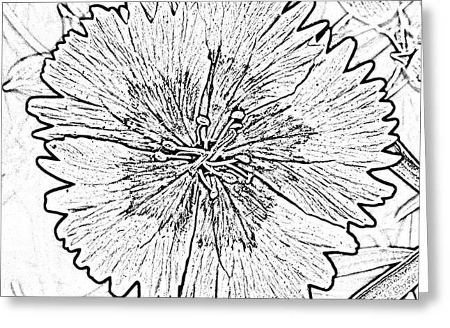 Photocopy Greeting Cards - Dianthus Red and White Flower Decor Macro Square Format Black and White Digital Art Greeting Card by Shawn O