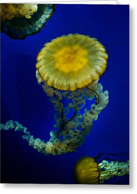 Jelly Fish Greeting Cards - Diaphanous Greeting Card by Joel P Black
