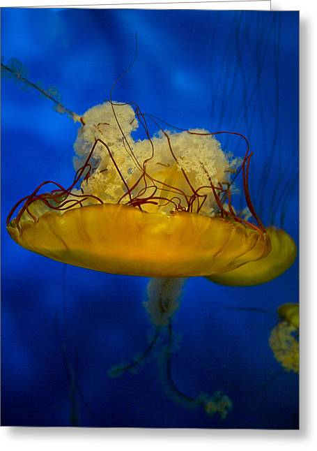 Jelly Fish Greeting Cards - Diaphanous Upside Down Greeting Card by Joel P Black