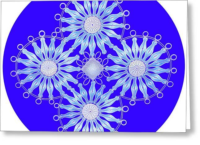 Diatoms Greeting Cards - Diatom Arrangement, Rheinberg Greeting Card by M. I. Walker
