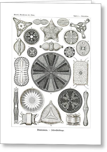 Excavata Greeting Cards - Diatomea Greeting Card by Splendid Art Prints