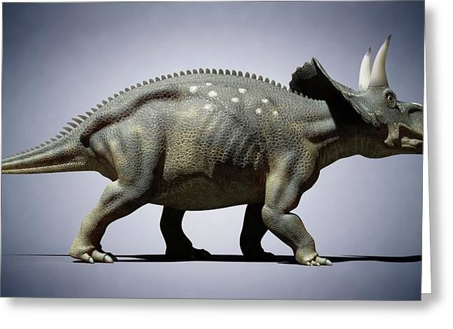 Diceratops Greeting Card by Sciepro