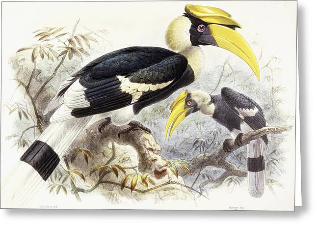 Dichocerus Bicornis Greeting Card by Johan Gerard Keulemans