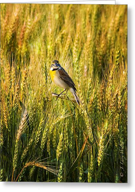 Masked Digital Art Greeting Cards - Dickcissel Posing on Wheat Head Greeting Card by J Larry Walker