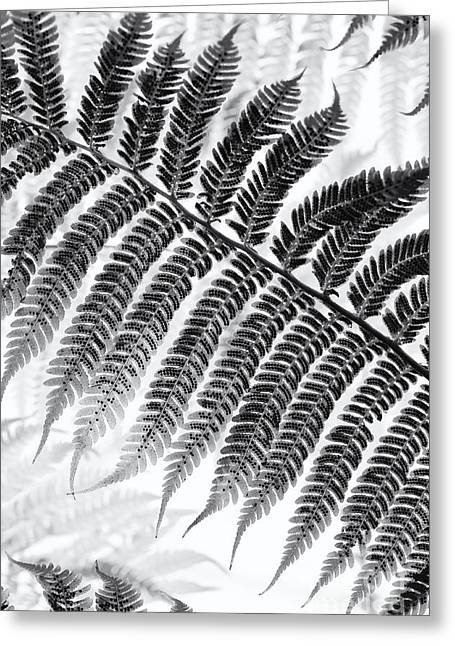 Frond Greeting Cards - Dicksonia antarctica Tree fern Monochrome Greeting Card by Tim Gainey