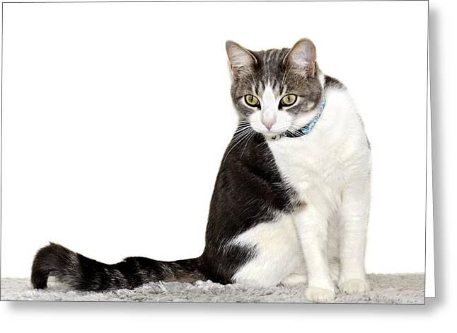 Did I Hear a Mouse Greeting Card by Susan Leggett