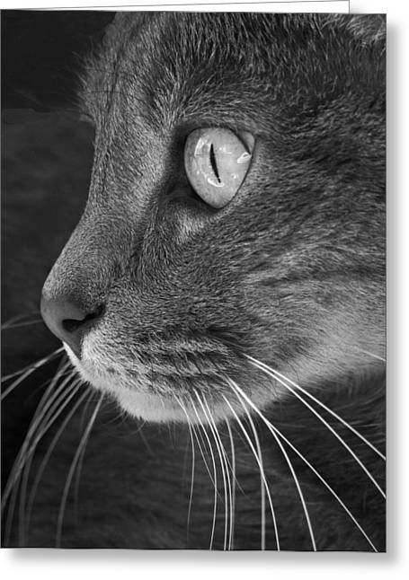 Gato Greeting Cards - Did Someone Say Mouse Greeting Card by Don Spenner