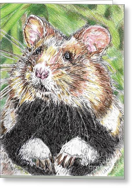 Hamster Drawings Greeting Cards - Did Someone Say Nuts Greeting Card by J McCombie