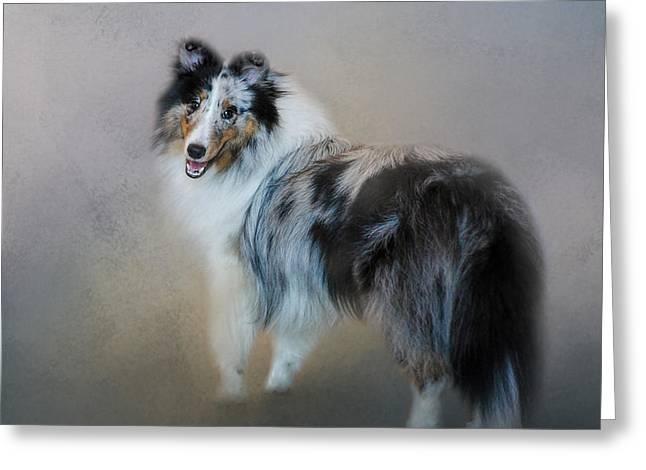 Dog Photo Greeting Cards - Did You Call Me - Blue Merle Shetland Sheepdog Greeting Card by Jai Johnson
