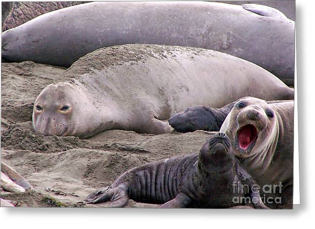 Elephant Seals Greeting Cards - Did you hear me Greeting Card by Jennifer  Robin