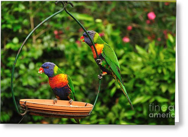 Did You See That... Greeting Card by Kaye Menner