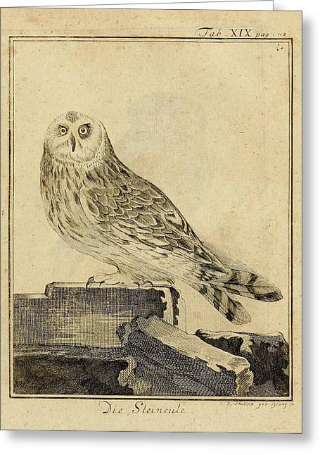 Stein Greeting Cards - Die Stein Eule or Church Owl Greeting Card by Unknown Artist