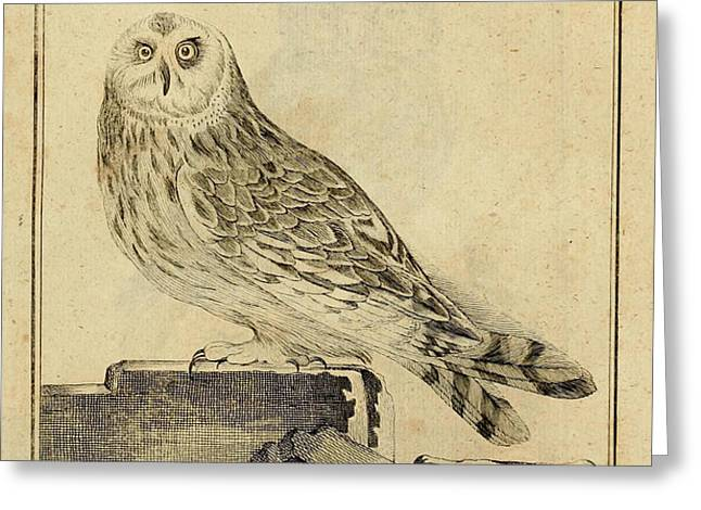 Die Stein Eule or Church Owl Greeting Card by Unknown Artist
