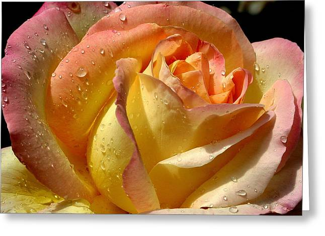 Different Hues Greeting Card by Marie Neder