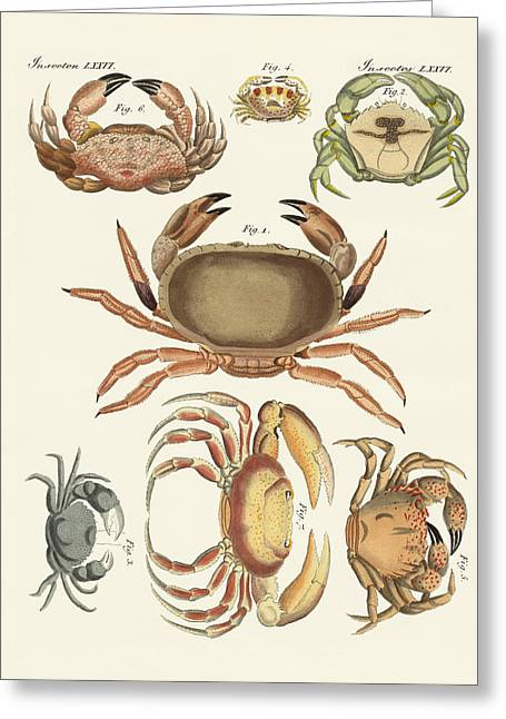 Powder Drawings Greeting Cards - Different kinds of crabs Greeting Card by Splendid Art Prints