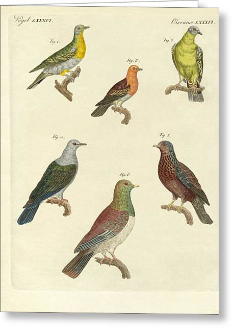 Different Kinds Of Exotic Pigeons Greeting Card by Splendid Art Prints