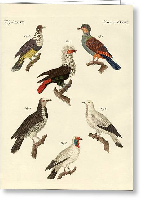 Different Kinds Of Foreign Pigeons Greeting Card by Splendid Art Prints
