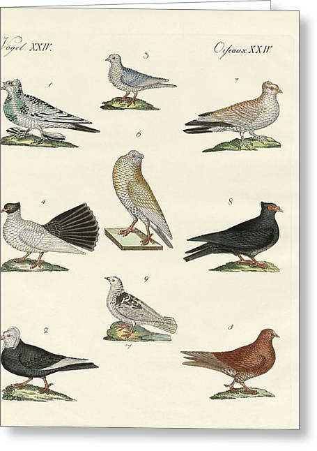 Mische Greeting Cards - Different kinds of pigeons Greeting Card by Splendid Art Prints