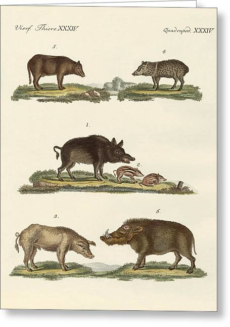 Wild Boar Greeting Cards - Different kinds of pigs Greeting Card by Splendid Art Prints