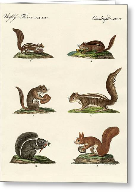 Different Kinds Of Squirrels Greeting Card by Splendid Art Prints